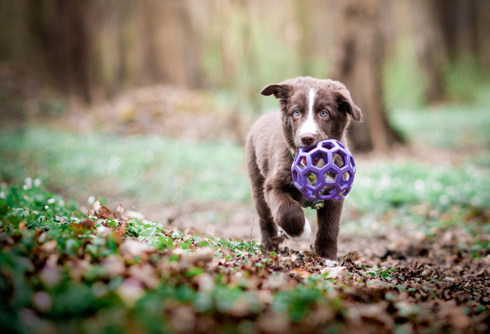 6. lekce - Socializace psa - Praktická část